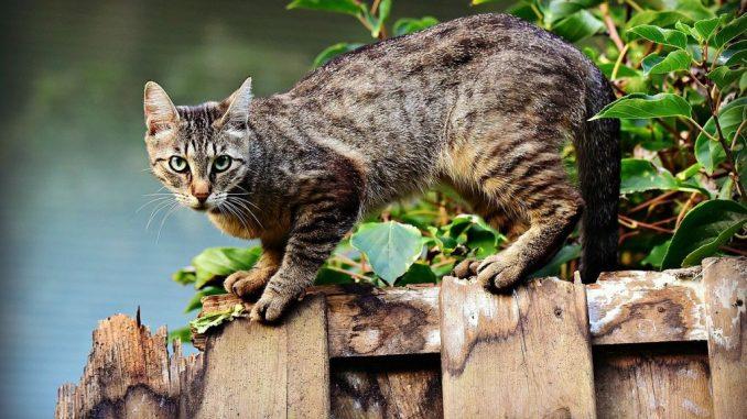 chat grimpe